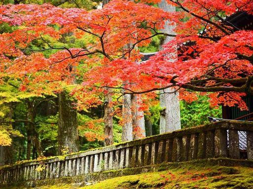 Momiji - az erdő csendjében, Kép: Japánspecialista