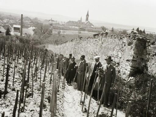 Mór látképe a Hársfa utca fölötti szőlőkből, a múlt századból, Kép wikimedia