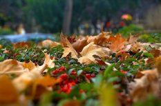 irodalom, költészet, ősz, szeptember, versek
