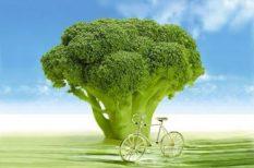 csökkentett kalória, diéta, fehérje, fogyókúra, folyadékfogyasztás, ősz, zöldséglé