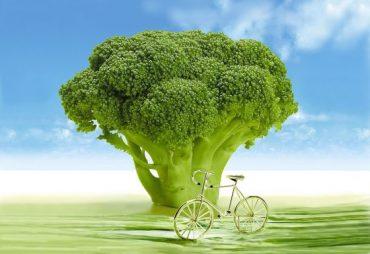 A legjobb zsírégetők egyike a brokkoli! Kép: Pixabay