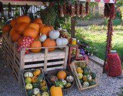 besenyők, Cece, füstöltáruk, házi készítmények, Mezőföld, ősz, paprika, tök, vásár