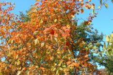 kirándulás, őszi erdő, őszi séta, programajánló, PTE Botanikus Kert, ritka növények