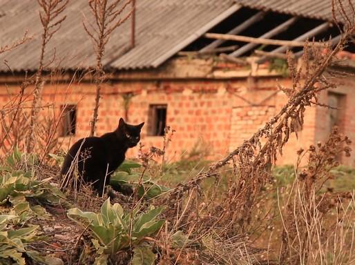Elhagyott fekete cica, Kép: eMag