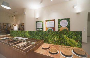 állatok, erdő, interaktív kiállítás, Kaposvár, Sefag, természet