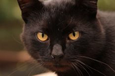állatvédelem, babona, emberi butaság, fekete macska, felelős állattartás