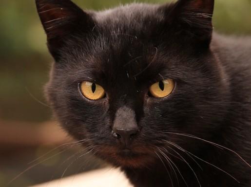 Fekete cica közeli, Kép: eMAG