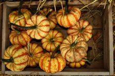 fesztivál, hétvége, ősz, programajánló, sütőtök, tök