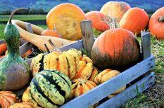 fesztivál, gasztro, hétvége, ősz, programajánló, sajt, sütőtök, tök