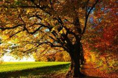 eső, évszak, gondolatok, október, ősz, természet, vers