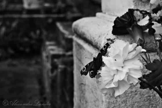 Lélekpillangó Fotó: Landor Alexandra