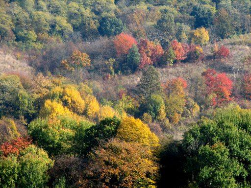 Őszi színek Fotó?: SEFAG Zrt