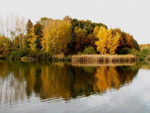 Őszi tópart Fotó: SEFAG Zrt