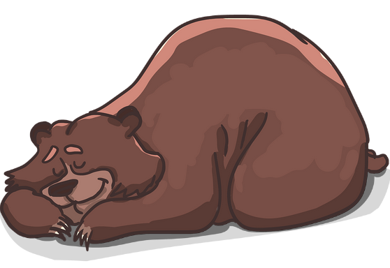 Alvó medve, rajz, Kép: pixabay