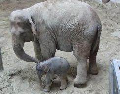 Arun, bébi, elefánt, Fővárosi Állat- és Növénykert, névadás