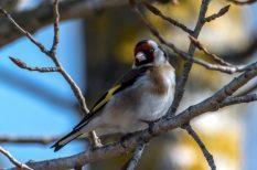énekes madarak, madáretető, tél