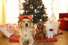 családtag, felelős állattartás, gondozás, karácsonyi ajándék, kutya, macska, megfontolás, örökbefogads