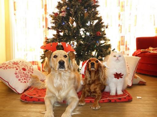 Kutyák, cica karácsonyi jelmezben, Kép: picabay