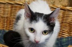 cica, családtag, felelős állattartás, karácsony, kutya, örökbefogadás, Rex Alapítvány