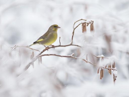 Téli madár 1, Kép: SEFAG Zrt