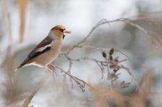 felelős állattartás, gondoskodás, madáretetés, magvak, tél
