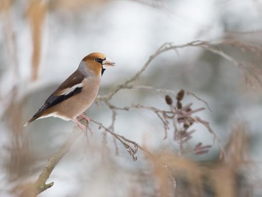 Téli madár 2, Kép: SEFAG Zrt.