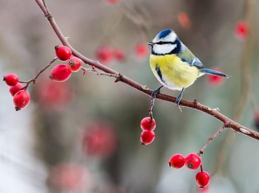 Téli madár 3, Kép: SEFAG Zrt.