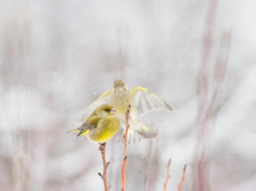 Téli madár 4, Kép: SEFAG Zrt.