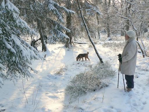 Téli séta kutyával, Kép: pixabay