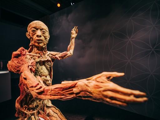 Body kiállítás, Kép: sajtóanyag
