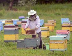 ENSZ, FAO, illegális halászat, méhek, tevék