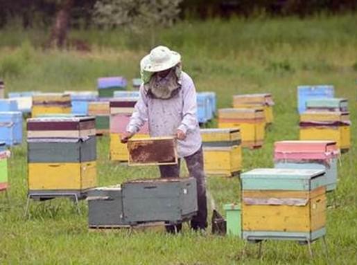 Méhek világnapja