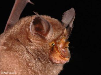 Mekong, orvvadászat, természetvédelem, új fajok, Vietnam, WWF