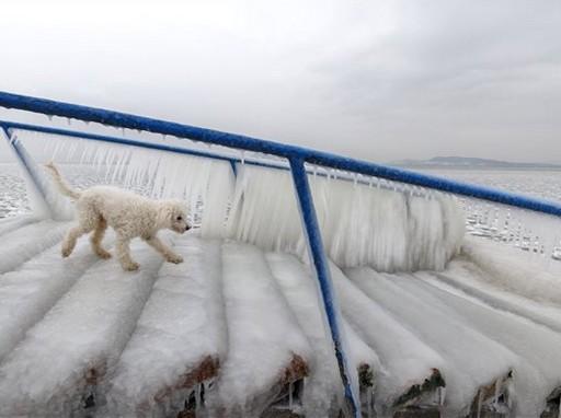 Fonyód, kutyus a kutyás strandon, Kép: MTI/Vagrga György