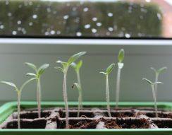 ásó, felkészülés, kapa, kertészkedés, tavasz, ültetés