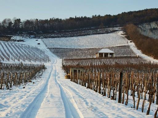 Tokaj dűlői télen, Kép: Furmint Photo