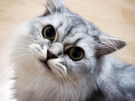 Macska belenéz a kamerába, Kép: pixabay