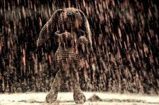 eső, fejfájás, front, húsvét, időjárás, Meteo-Klinika