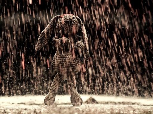 Nyúl esőben, Kép: pixabay