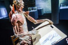 adatok, BODY kiállítás, emberi test, érdekességek, szervezet