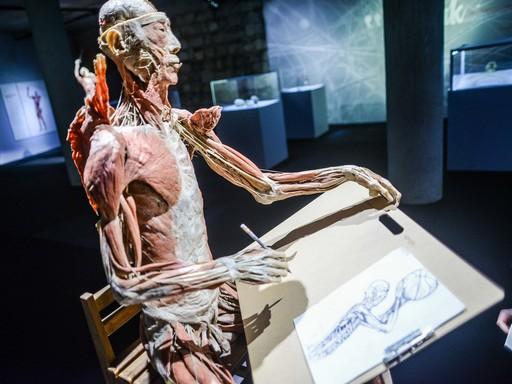 Rajzoló ember a BODY Kiállításról, Kép: BODY Kiállítás