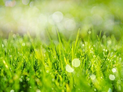 Tavaszi fű a napfényben, Kép: Public Domain Pictures