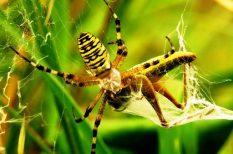 biotermesztés, klímaváltozás, pók, tudomány
