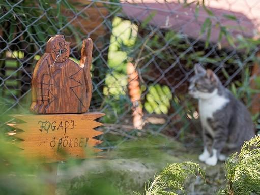 Új kampány a cicusokért, Kép: PreVital
