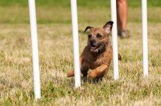 EB, Engedelemes Kutyák Napja, kutyaiskola, Rex Kutyaotthon Alapítvány