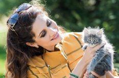 boldogság, cica, Fogadj örökbe, házi kedvenc, kampány, macska