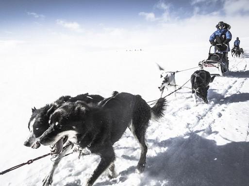 Kutyaszán, Kép: Fjallraven Polar