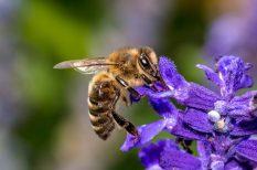 allergia, gyógyszer, méz, széna, tévhitek