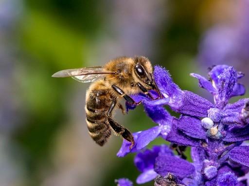 Méh a virágon, Kép: pixabay