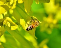 élelmezés, ENSZ Élelmezésügyi és Mezőgazdasági Szervezete, FAO, méhek beporzók, világnap